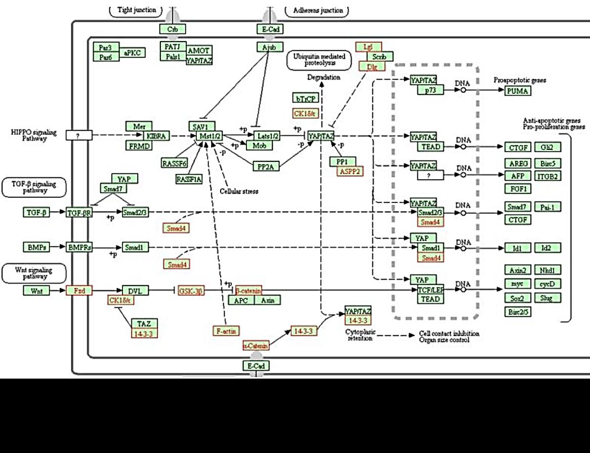 Sox4 ChIP-Seq data analysis   CityU-Bioinformatics
